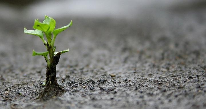 La escasez de tierras fértiles
