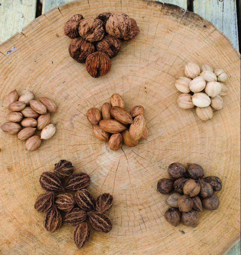 Encuentro internacional de productores de nueces será en Chile