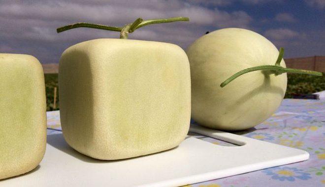 Melones cuadrados y más dulces; la nueva fruta chilena