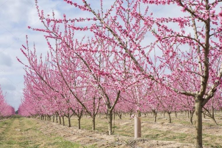 Opciones para invertir en terreno hortofrutícola