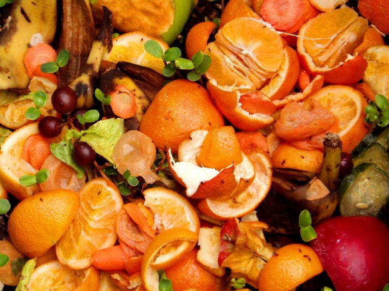 FAO: 55 % de los alimentos que se desperdician en mundo son frutas y verduras