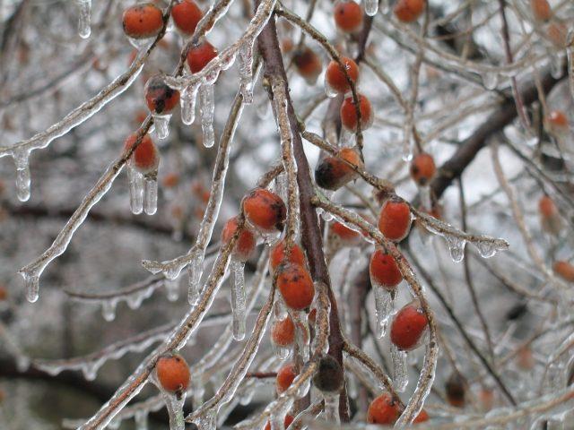 Alerta de heladas 2018, mal clima para la fruta