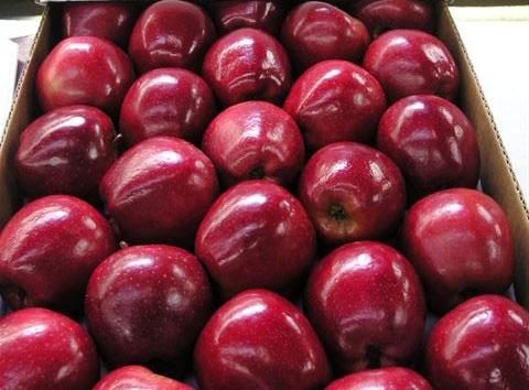 Frutas chilenas aumentarán exportación a Brasil