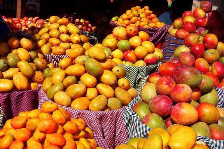 Comenzó entrada de mangos desde Guatemala