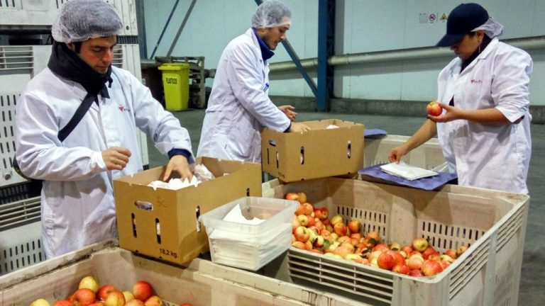 Biopapel reducirá la pérdida de fruta en las exportaciones