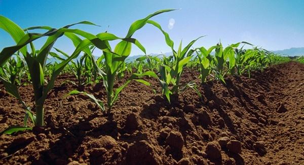 La salud del suelo ayuda a combatir el cambio climático