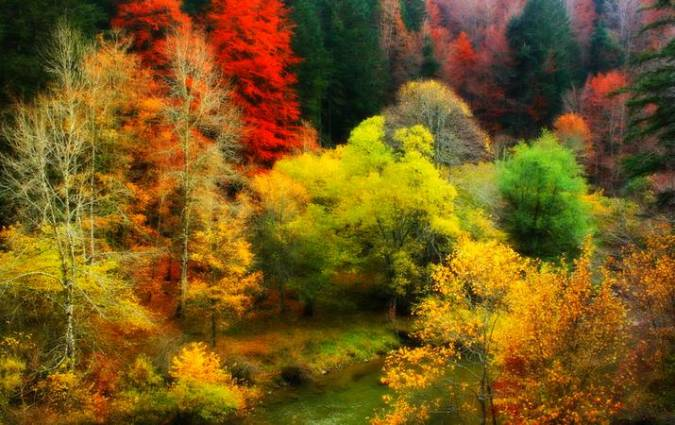 Aclareo facilita adaptación de árboles frente al cambio climático