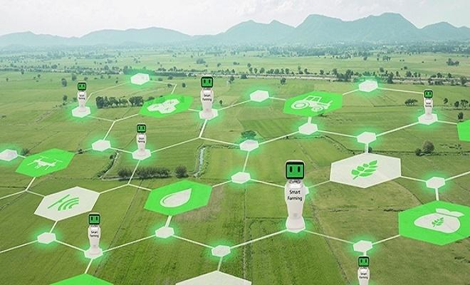 """Solución """"agro inteligente"""" optimiza riegos y controla rendimiento de cultivos"""