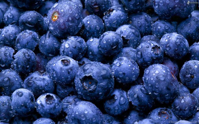 Exportación de arándanos se mantiene fresca y bate récord en orgánicos