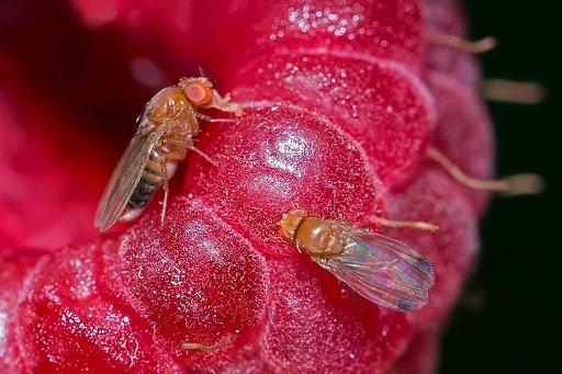 Control de plagas en frutales se intensifica en época de sequía