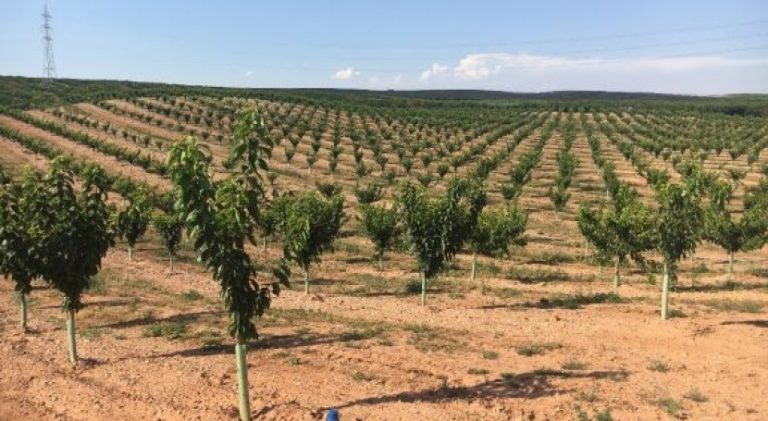 El riego que de verdad necesita la fruta en Chile
