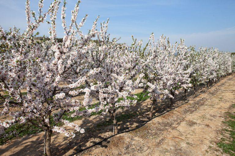 Sequías silenciosas y soluciones para buenos frutos