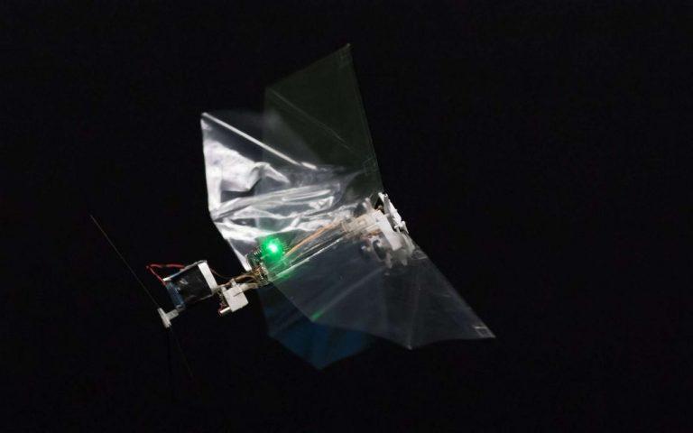 Abejas y moscas robots: opción en polinización y buenos frutos