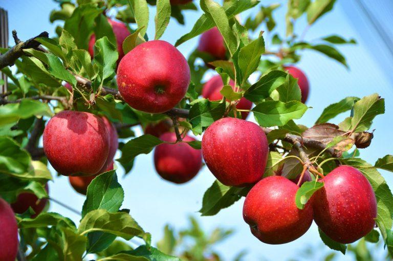 Transición y reapertura de la economía agrofrutícola chilena con buenas proyecciones
