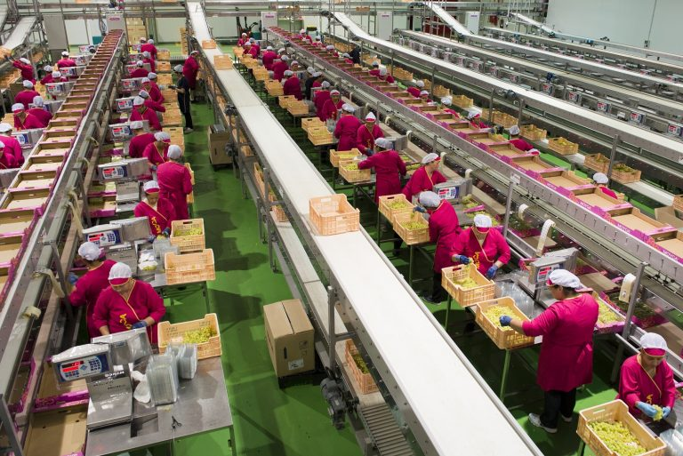 Industria de la fruta; análisis y medidas preventivas en campos y packings