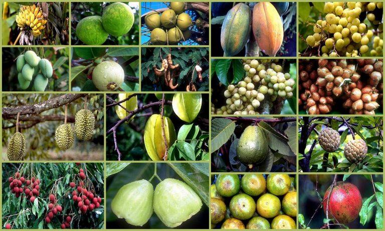 Desafíos y riesgos en el mercado del puré de frutas tropicales