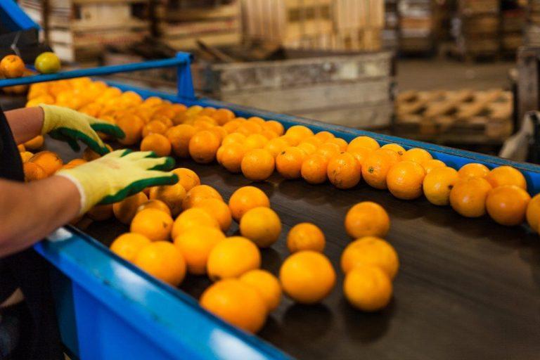 Higiene y trazabilidad de la fruta y los alimentos