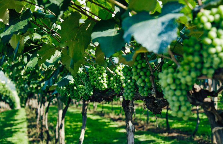 Positiva se prevé próxima temporada de fruta para Chile