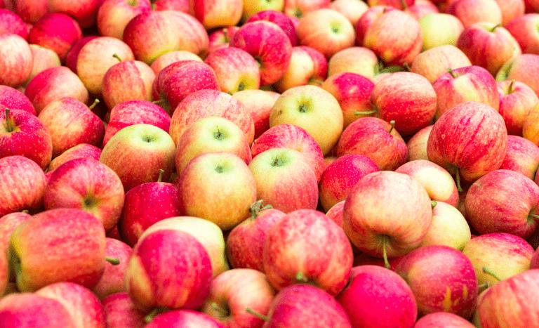 Navieras y los desafíos operacionales para temporada 2021 de la fruta fresca de exportación