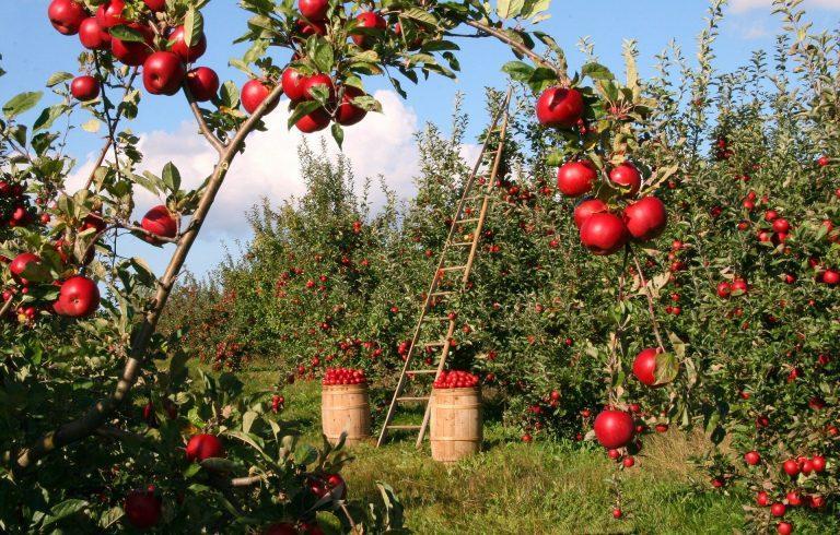 Caída del 4% registra exportación de frutas frescas y frutos secos