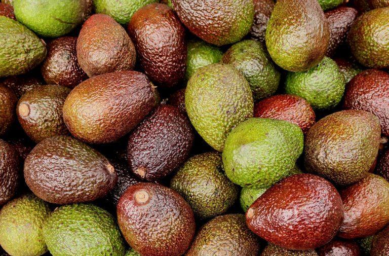 Extracto de Persea Gratissima fruta Mercado 2021; análisis e impacto de la industria global de la palta