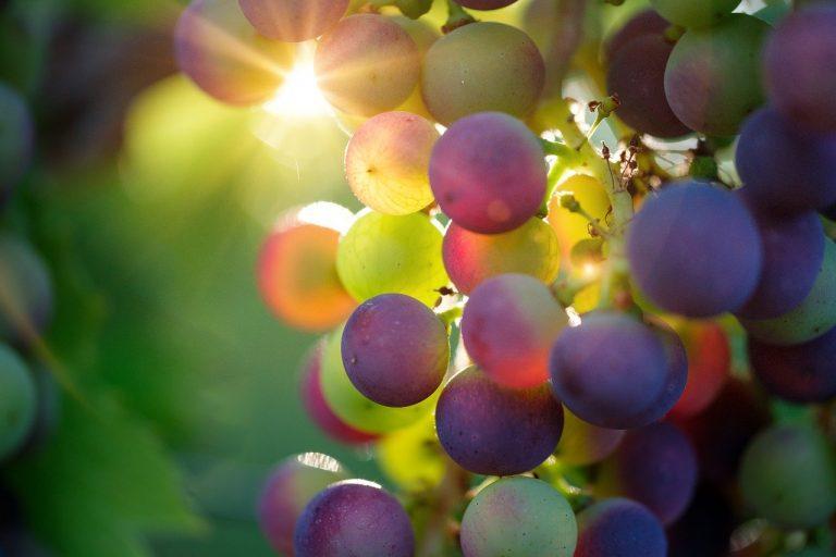 Actualizado directorio comercial de la industria frutícola