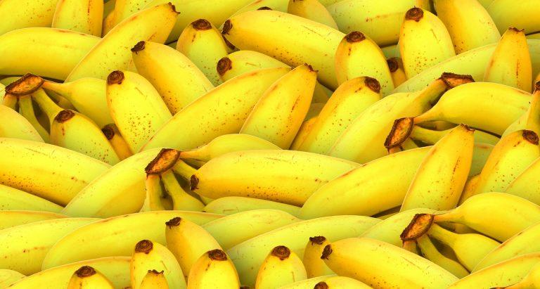 Alianza Global por plaga que pone en riesgo el futuro del plátano