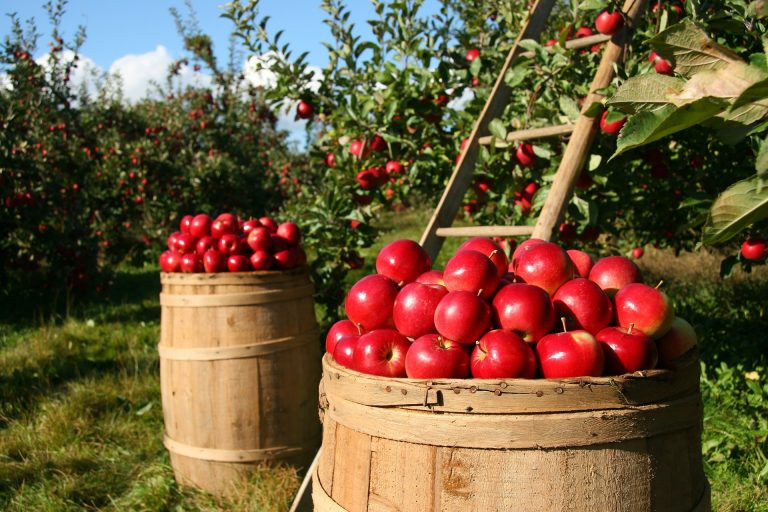 Agricultura Inteligente; la nueva apuesta del mercado