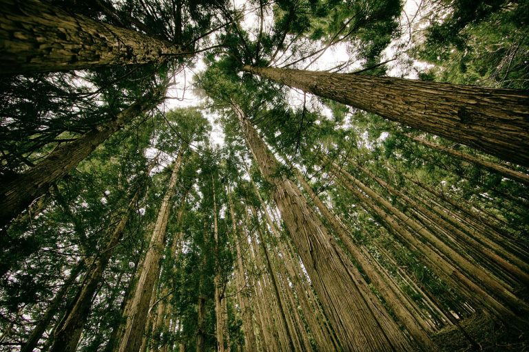 Tendencia al alza registran exportaciones forestales y madereras chilenas