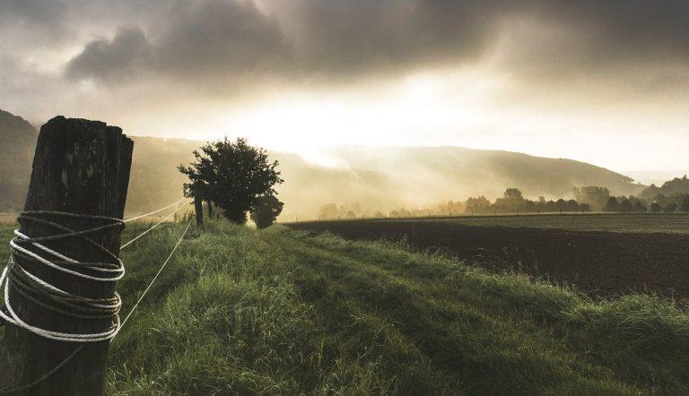 Gestión de residuos agrícolas hacen crecer la economía