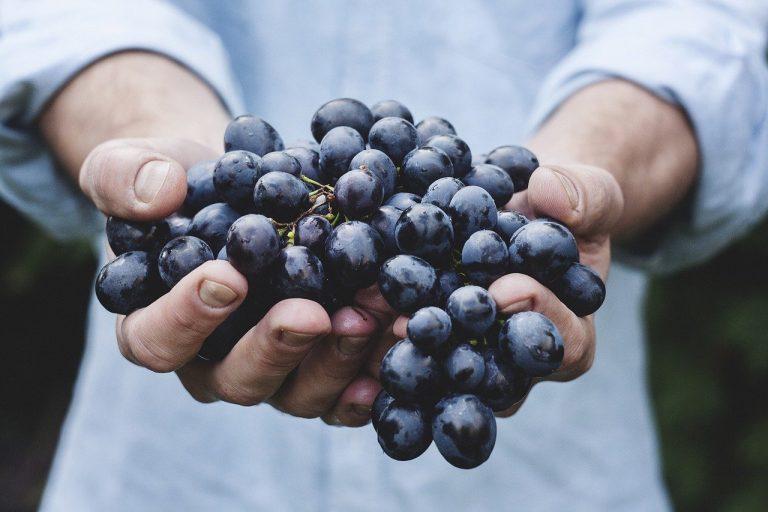 Son más de 1500 los proveedores de fruta ya registrados