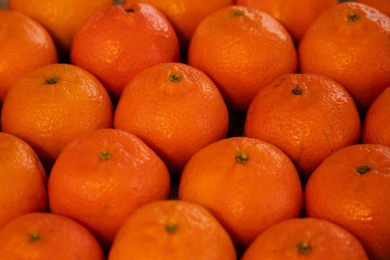 Clementinas, se proyecta aumento del 7% en exportación
