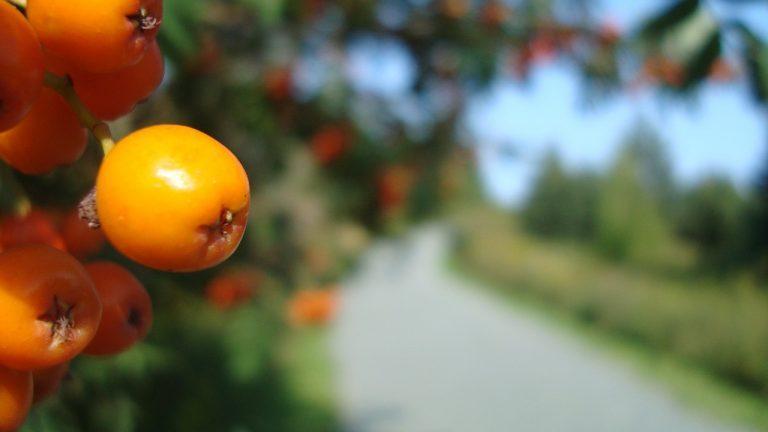 Ruta de la Fruta, comienzan las obras en San Antonio