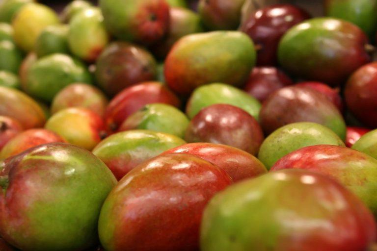 Adhesivos orgánicos reducen pérdida de fruta fresca de exportación