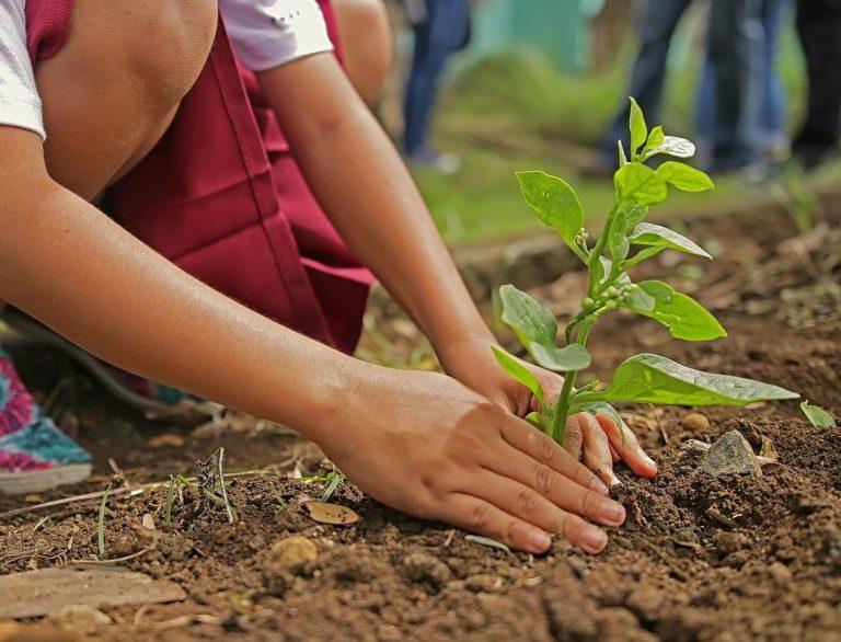 Tecnología clave para una agricultura más sustentable